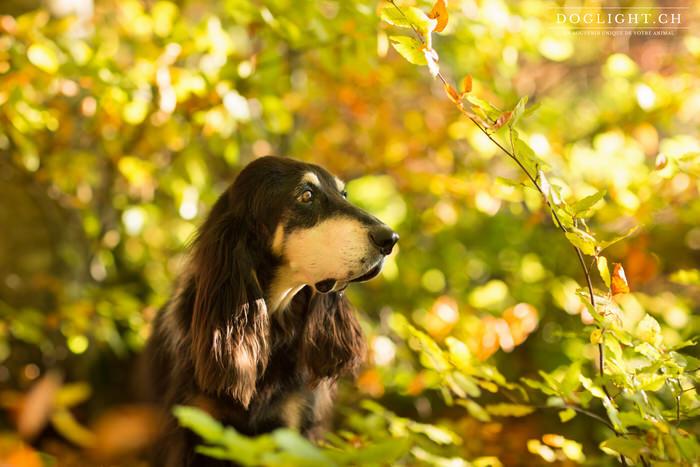 Photographier un chien âgé photographe animalière