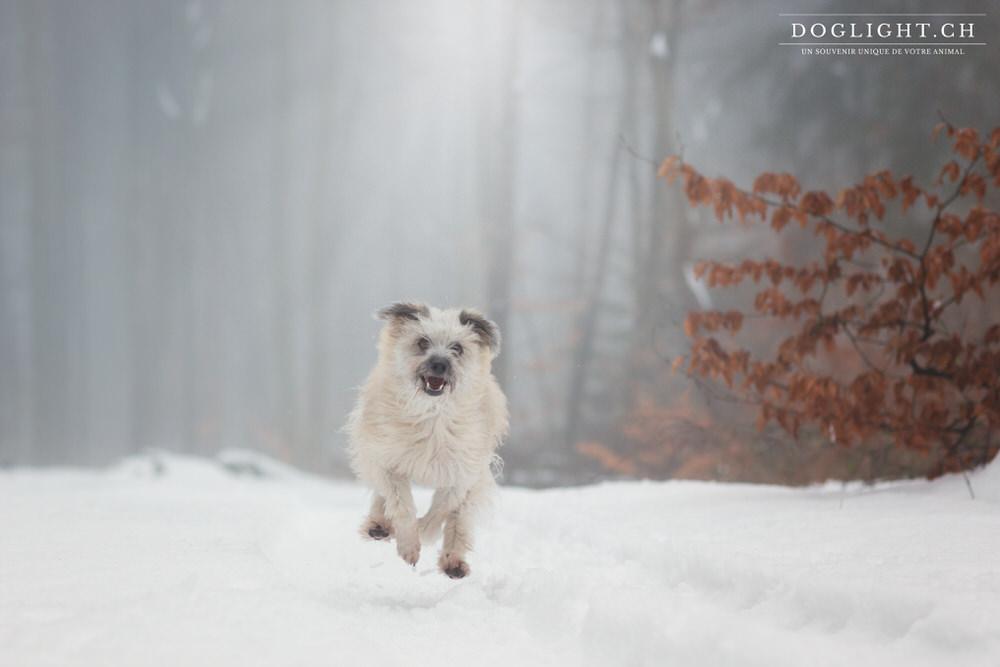 photo chien hiver neige lumière hivernale