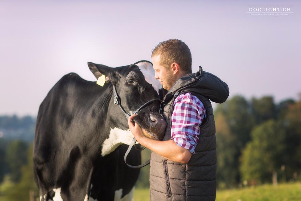 photo vache paysan relation agriculteur et vache