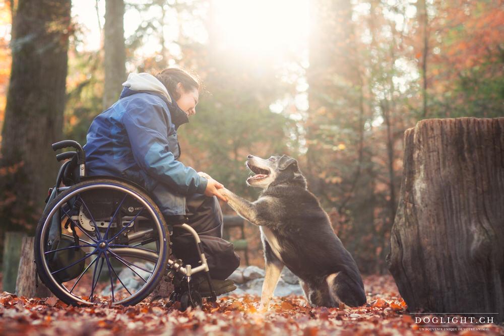 bouvier appenzellois fauteuil roulant et chien