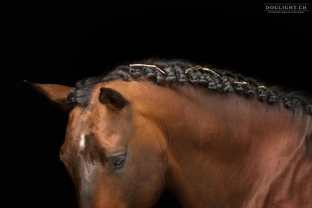 Bijoux équestre pour chevaux en or - Photographie