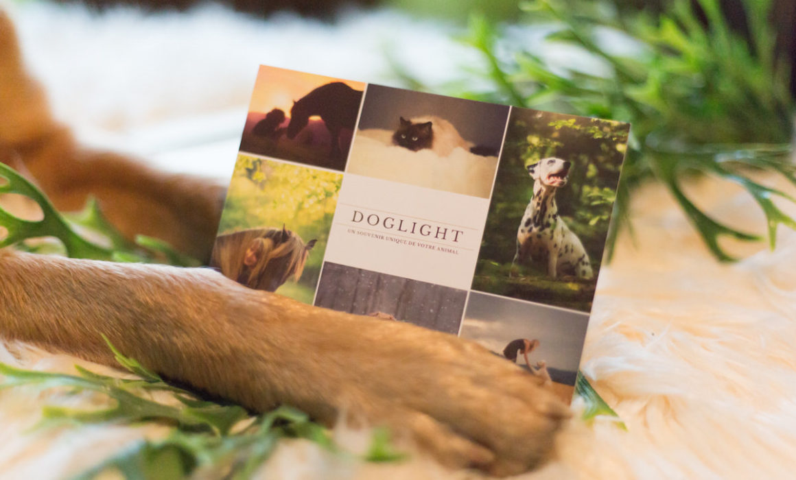 carte cadeau amoureux des animaux shooting