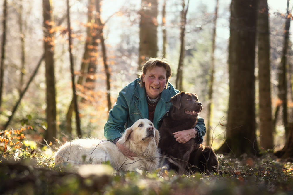Photographe labrador et golden retriever en hiver