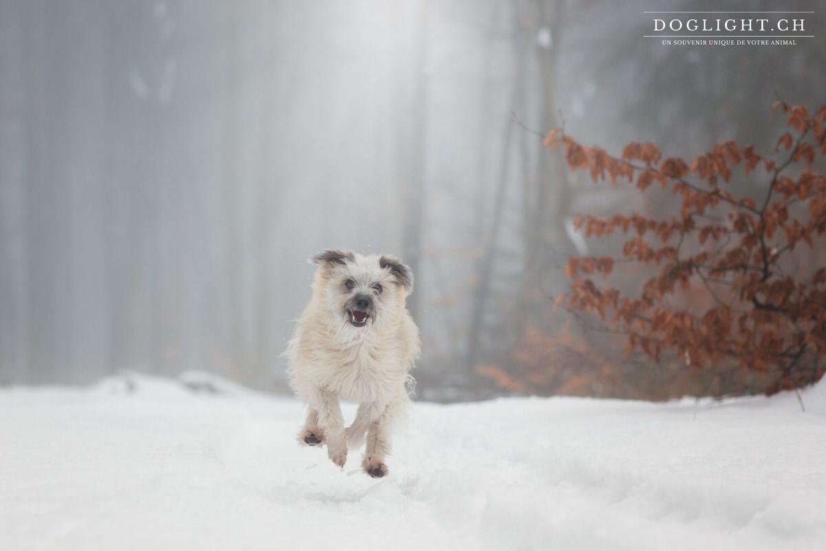 Berger des Pyrénées qui court dans la neige