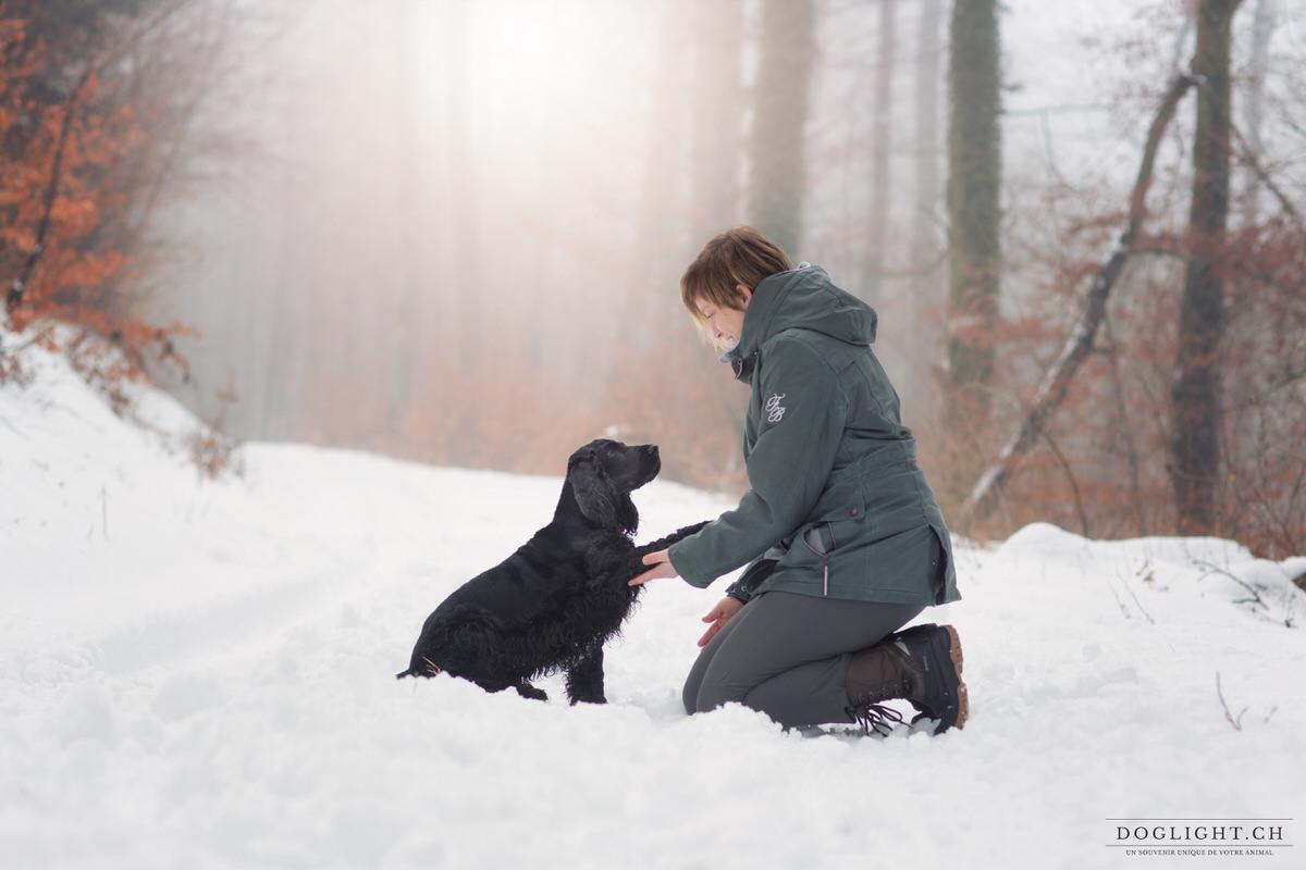 Photographe cocker dans la neige en hiver