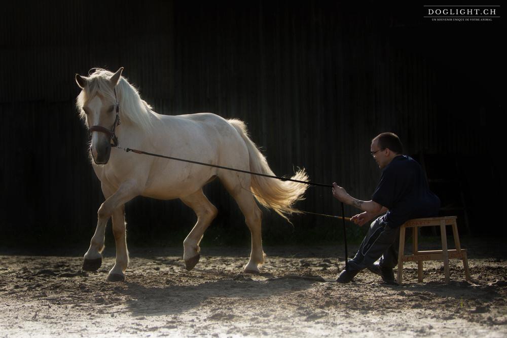 Spectacle équestre handicap - Laurent & Kana en Belgique
