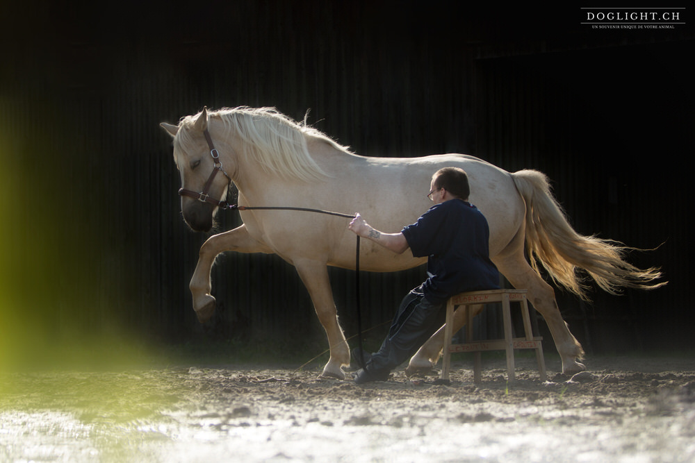 Pas espagnol cheval - Handicap