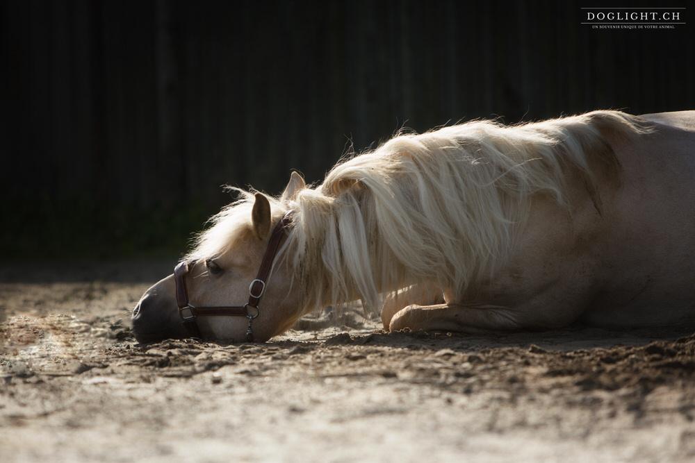 Cheval qui se couche - Spectacle équestre