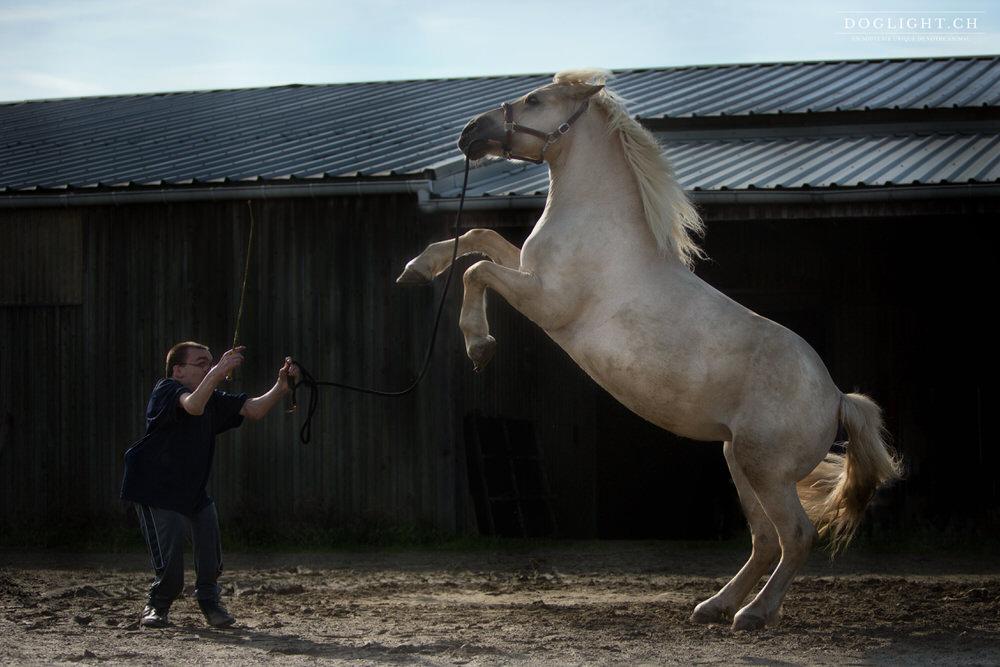 Spectacle équestre, cheval qui se cabre avec handicap