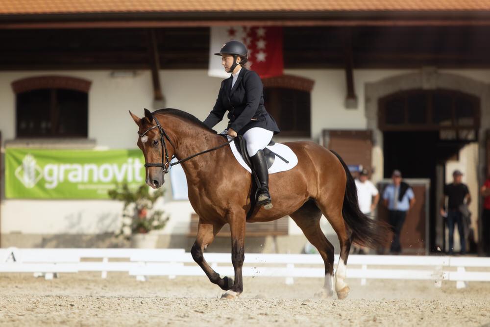 Compétition équestre en Suisse - Dressage | Photographe