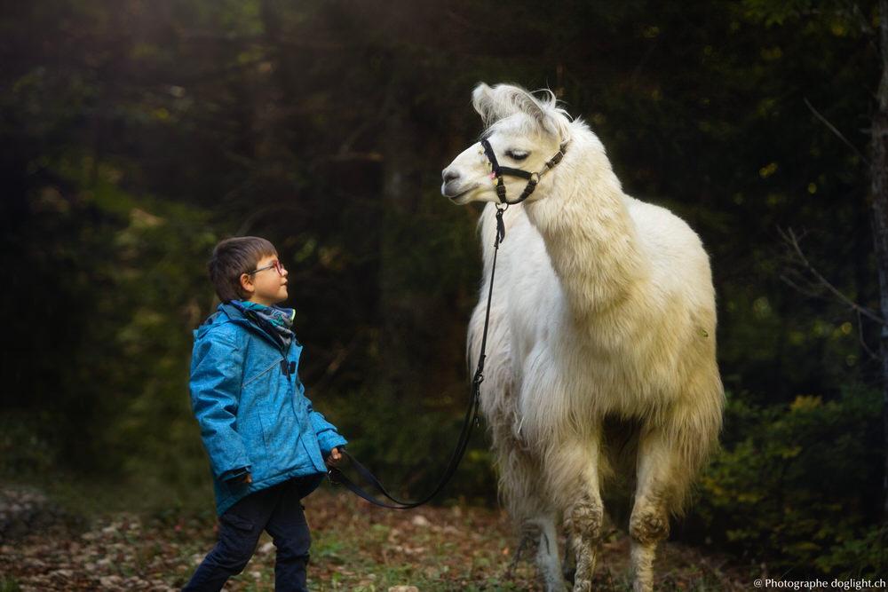 Sortie Lama avec enfants