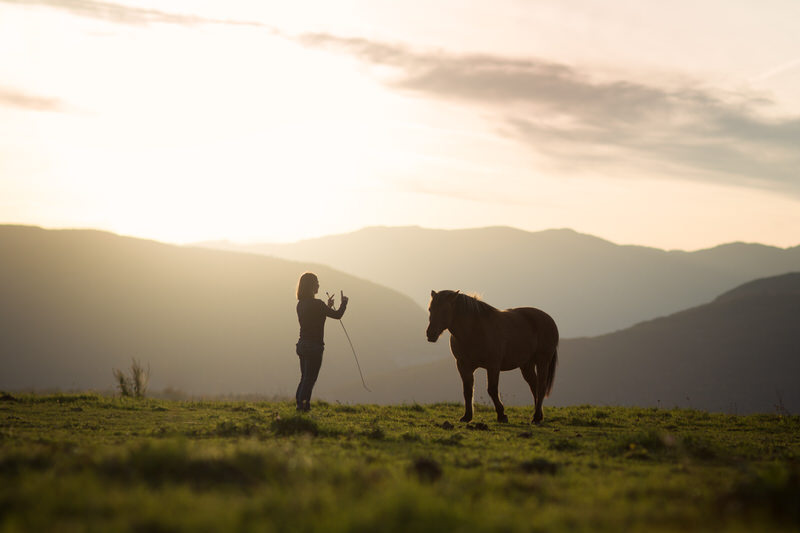 Photographe professionnel éthologue, comportementaliste chevaux