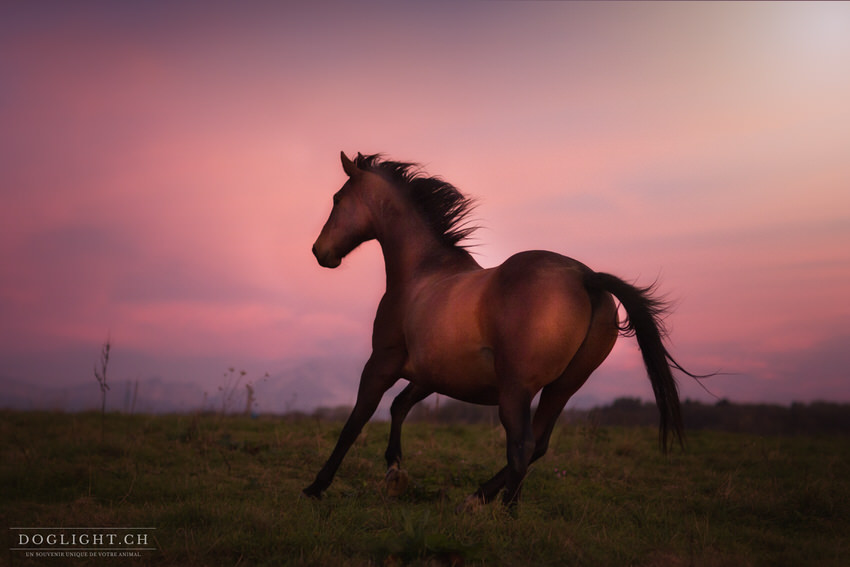Cheval qui galope photographe