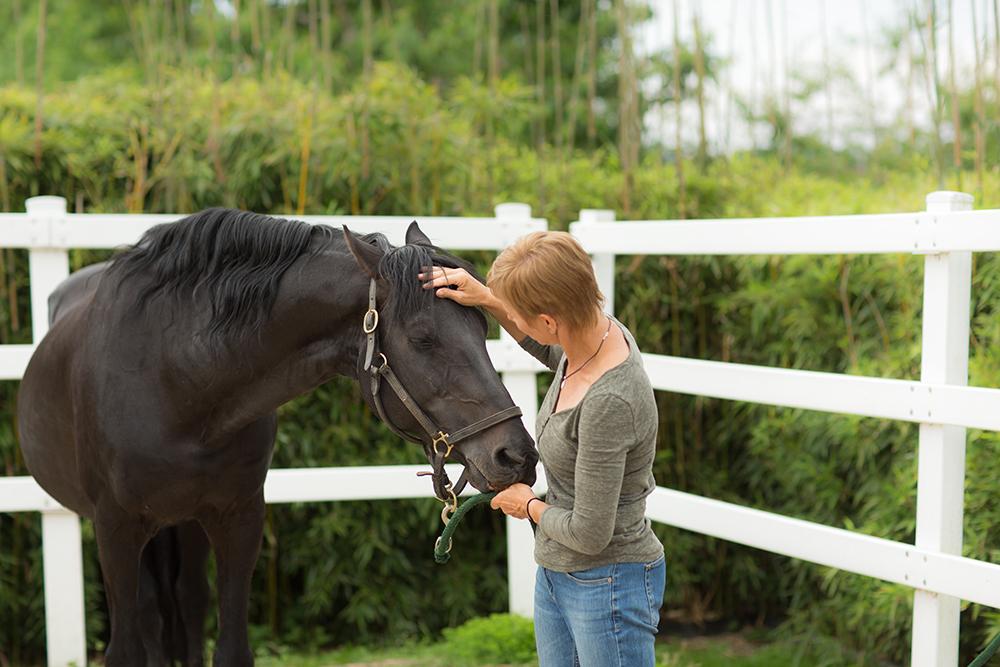 Photographe thérapeute cheval