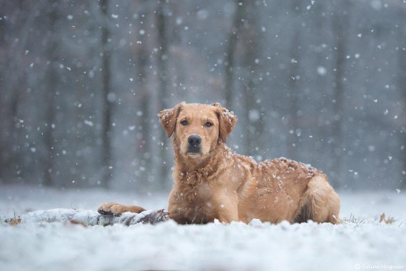 Chien sous la neige photographe