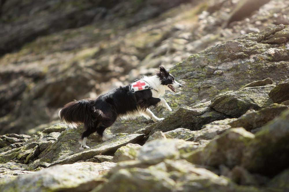 Chien de sauvetage du Valais photographe