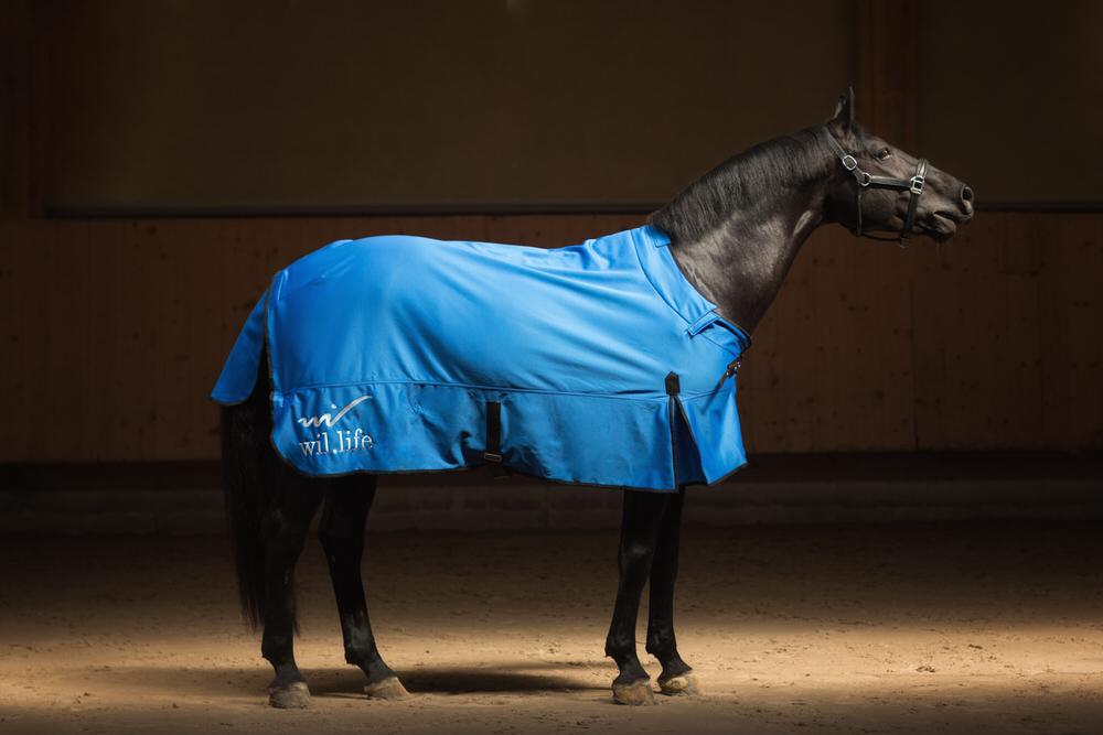 Couverture santé pour chevaux Willife
