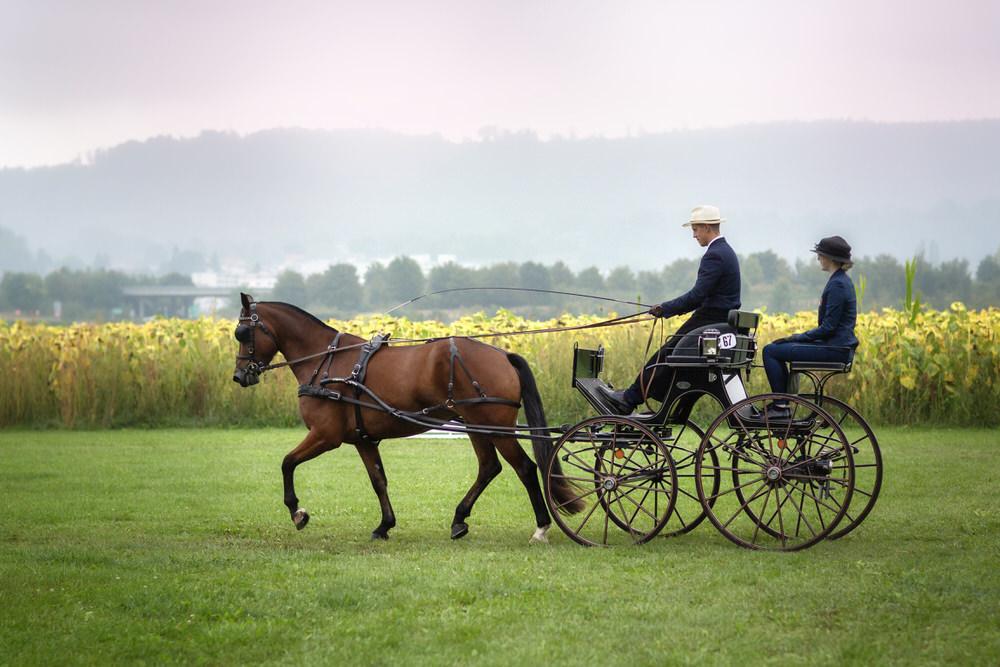 Concours d'attelage chevaux suisse - Photographe