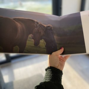 Livre photo animal shooting professionnel