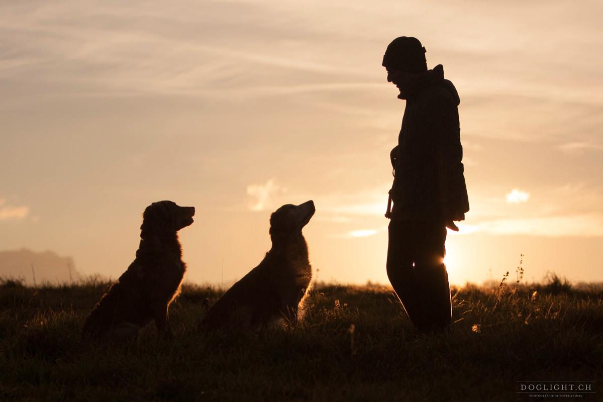 Homme avec ses 2 chiens fin de journée