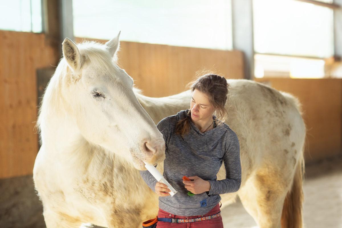 Soin chevaux thérapeute éducateur