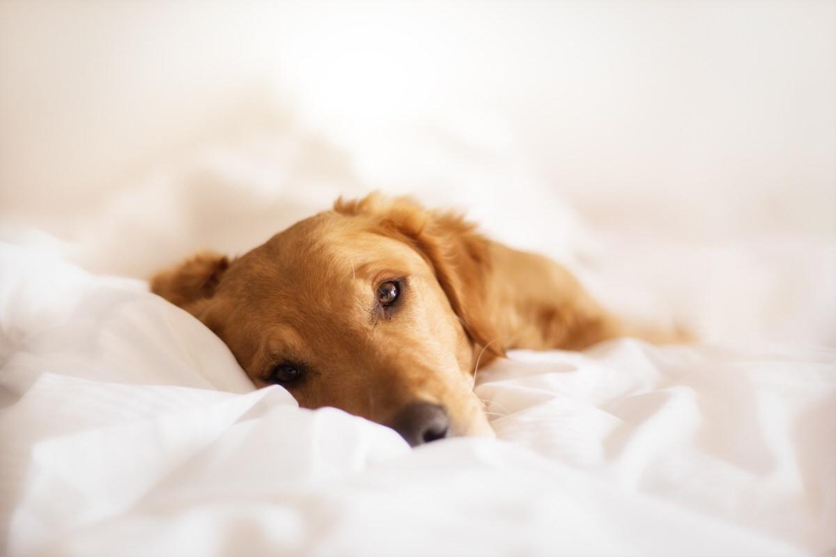 Photo regard intense chien - photographe