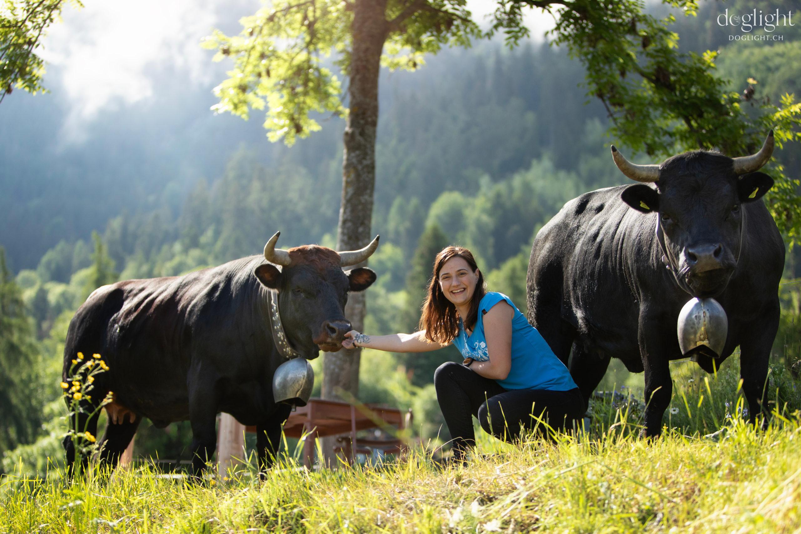 Présentation vache d'Herens
