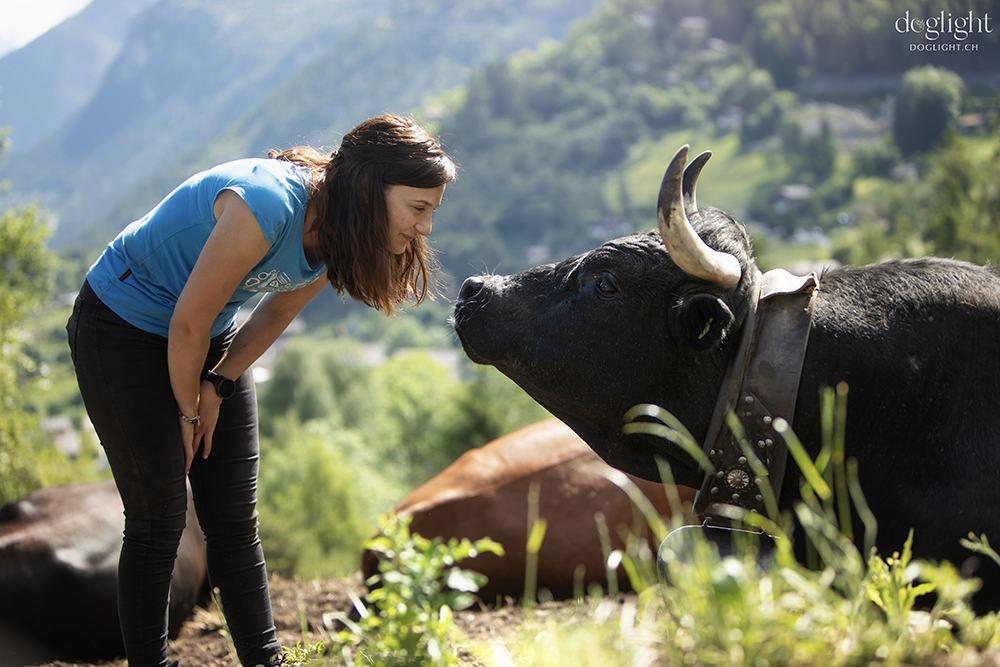échange de regards avec une vache