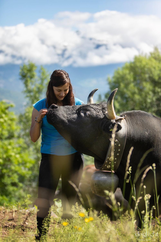 Vache face au montagne Valais